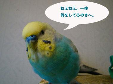 201003072.jpg