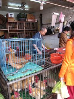 台北朝市鶏肉