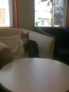 健くんポジションの猫