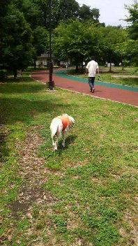 散歩公園2