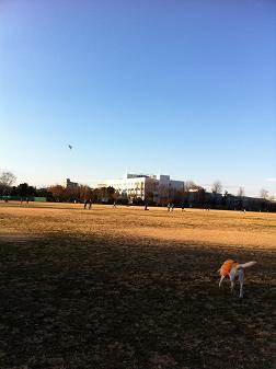 正月公園1