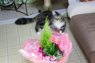 ジャガーと花