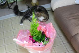 花とジャガー
