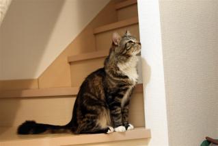 階段にて2