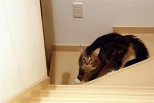 階段駆け上がり1