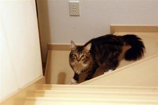 階段駆け上がり2