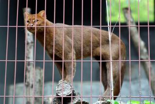 動物園のネコ科写真2