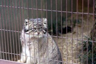 動物園のネコ科写真6