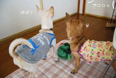01_20100720081019.jpg