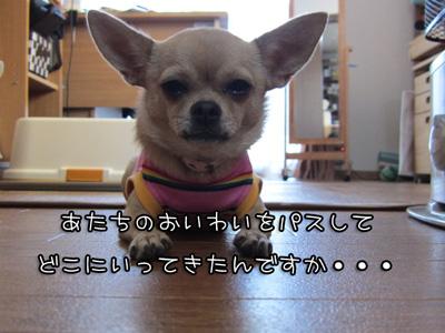 02_20101108195115.jpg