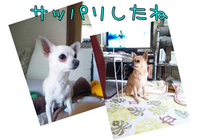 03_20100507102211.jpg