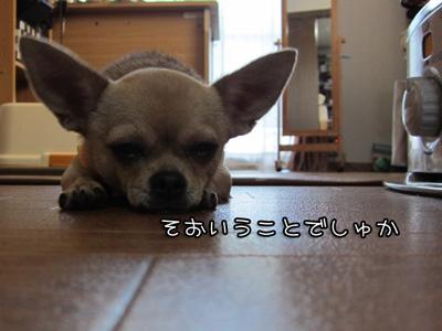 03_20101108195115.jpg