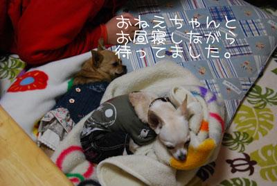 04_20100201172132.jpg