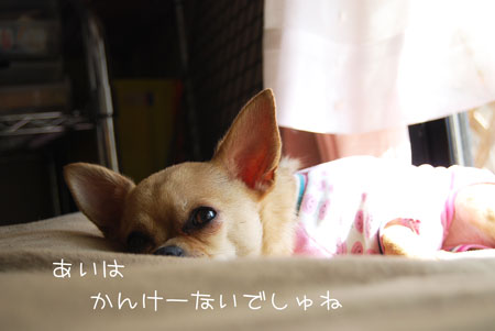 04_20100215182937.jpg