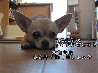 04_20101108195115.jpg