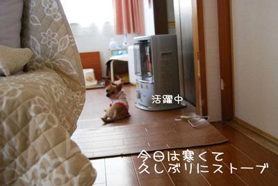 05_20100513101313.jpg