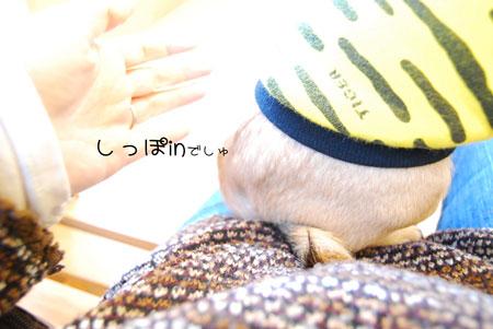 08_20100207130508.jpg