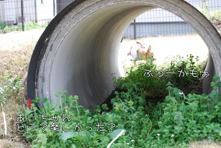 11_20100415193017.jpg