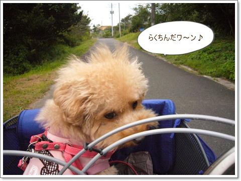 cats_20081005224944.jpg