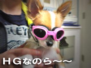 DSC07039.jpg