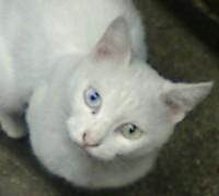 外の白猫天使その2