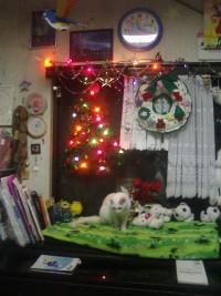 去年のクリスマス