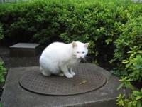 外の白猫天使その1