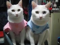 パジャマだよん♪
