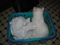 洗濯ものと…
