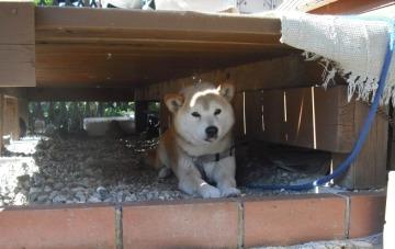 ウッドデッキと犬2