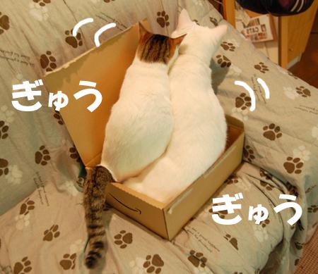 箱入り仲間4_081227