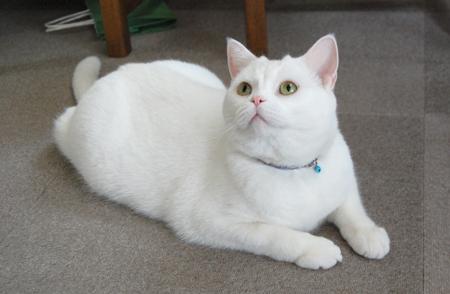 実家猫2_090104