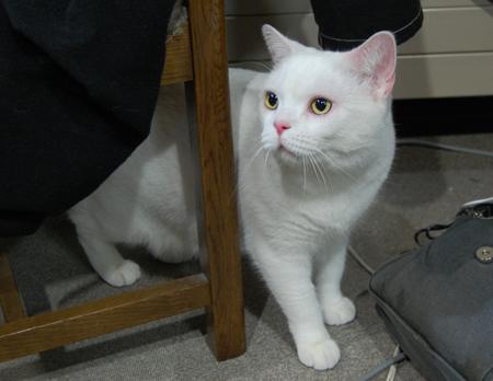 実家猫4_090104