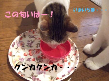 猫茶4_090317