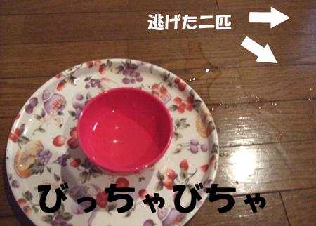 猫茶5_090317