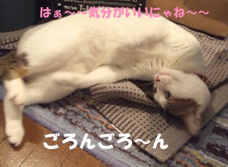 猫茶6_090317