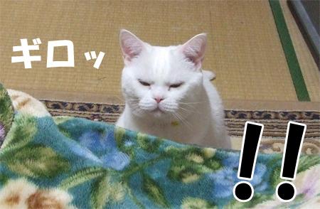 怒りメメタ1_090502