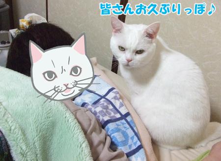 怒りメメタ2_090502