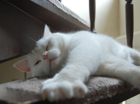実家猫5_0906