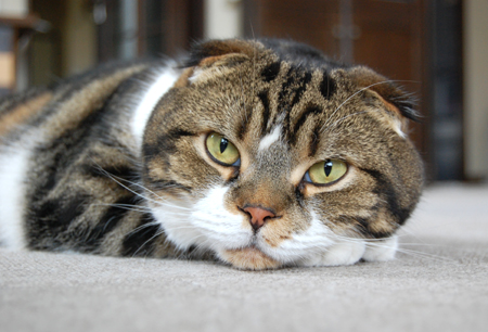 実家猫9_0906