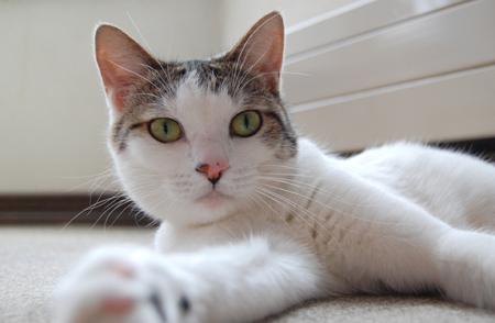実家猫11_0906