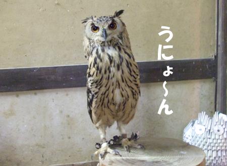090812_花鳥園9