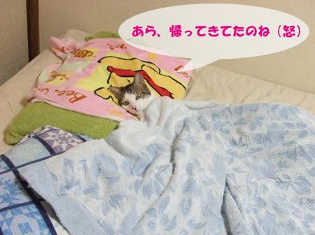 夏休みの猫_090816