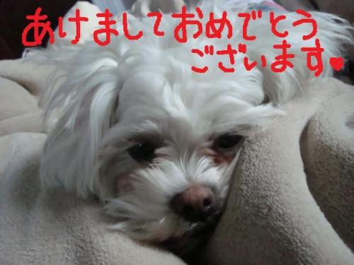 DSC01300_convert_20110102092319.jpg