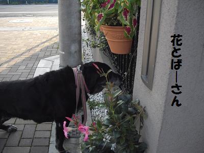 花かぐミニー