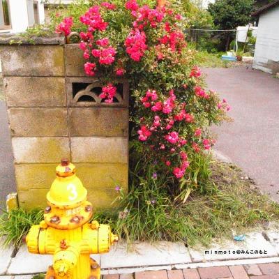 花と消火栓