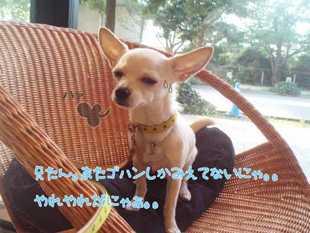 お台場DOG CAFE2
