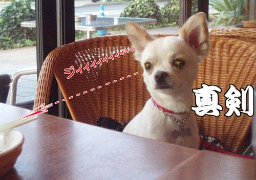 お台場DOG CAFE5