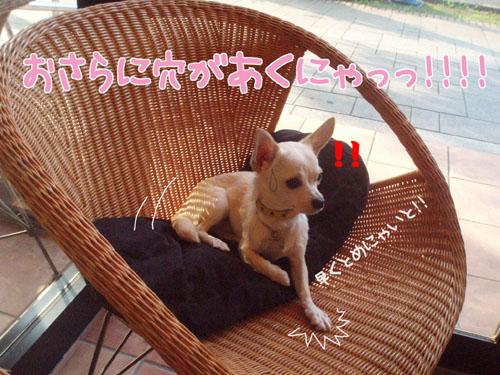 お台場DOG CAFE6