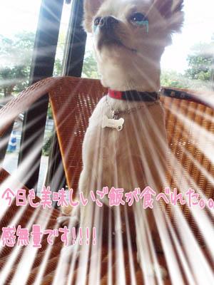 お台場DOG CAFE7